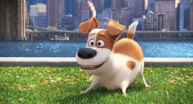 lemmikkien-salainen-elama-arvostelu-koira
